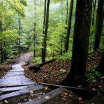 bosque nueva escocia