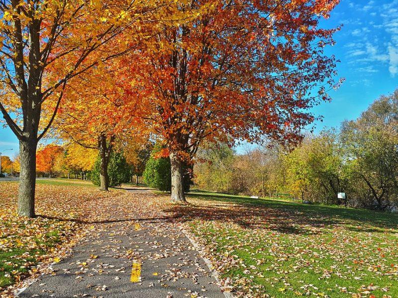 Parque estudiantil en Canadá